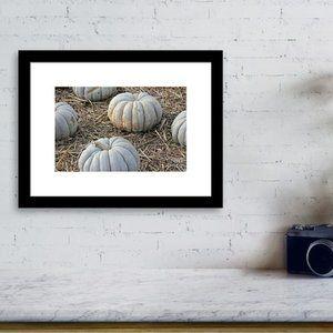 White pumpkins 8x10 Fine Art Photograph